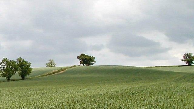 Fields near Hoton