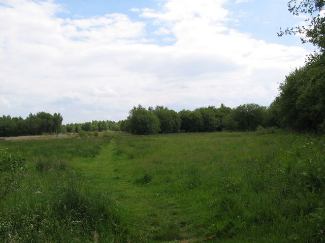 Meadow, near Emer Farm