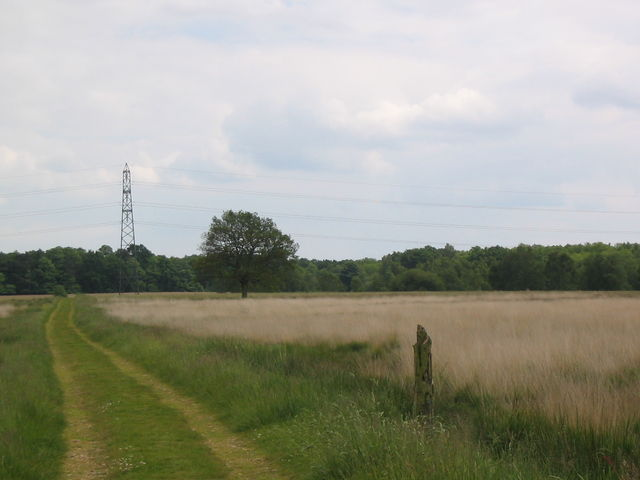 Grassland, north of Baddesley Common