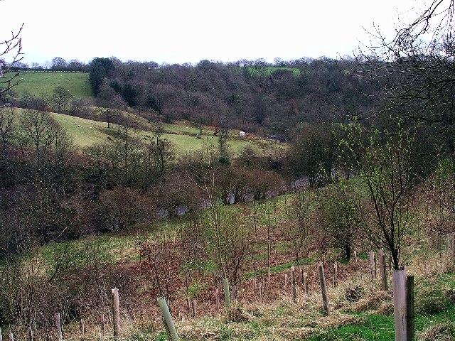 Low Luckens Farm & River Lyne