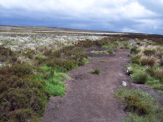 Hog Hill footpath