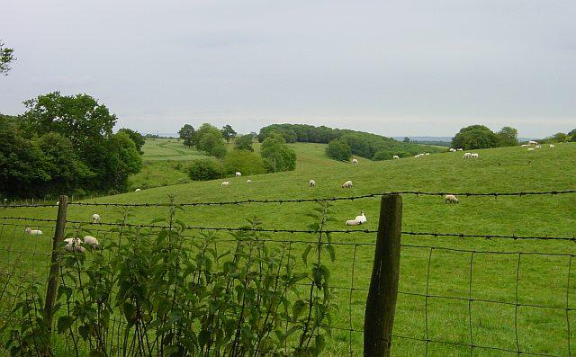 Meadow near Hucking