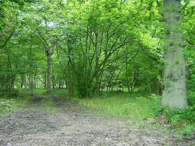Chitt's Wood, Hucking