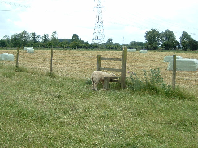 Sheep in Stile