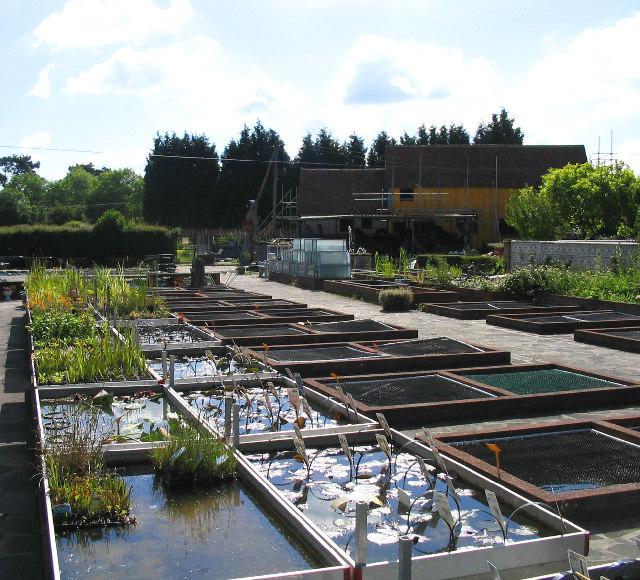 Tisbury Aquatic Nursery, Noak Hill, Essex