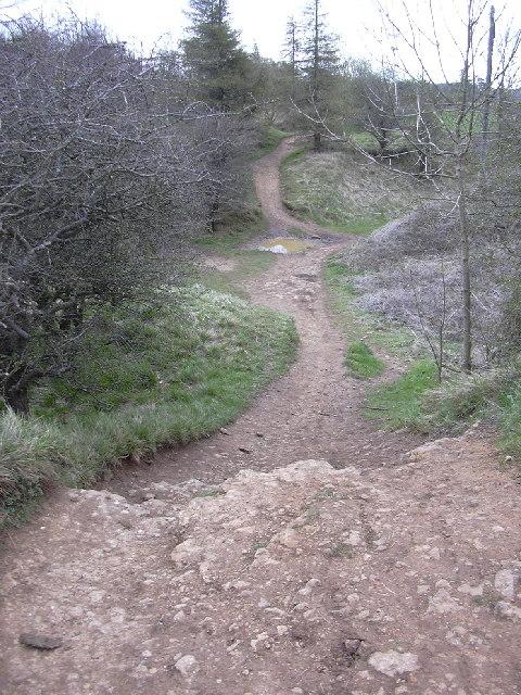 The Cotswold Way, Leckhampton Hill, Cheltenham