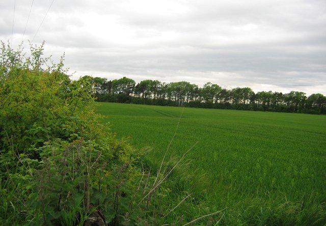 Arable fields near East Saltoun