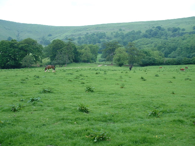 Good Grass in the Black Mountains