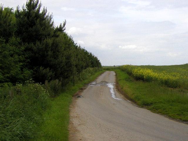 Roadside wood