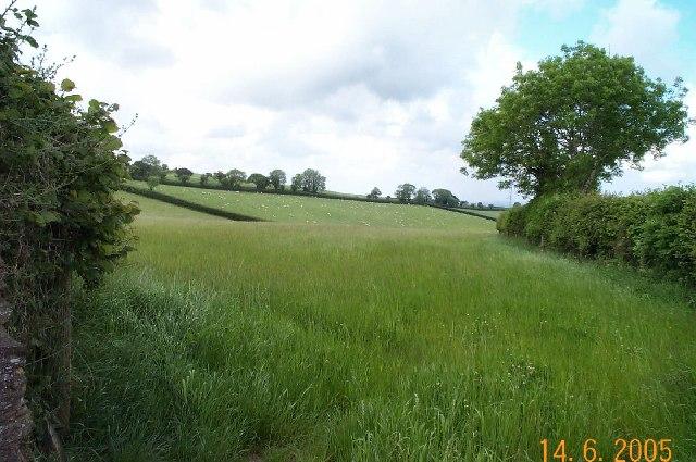 Diptford field