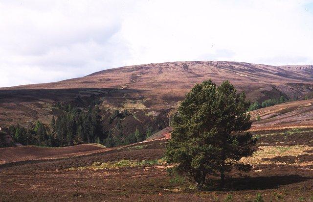 Moorland, Drynachan
