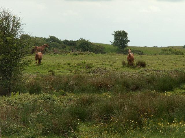 Horses, Glan-rhos