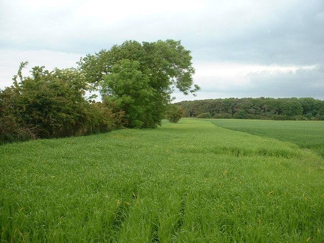 Farmland near Wildboar Farm