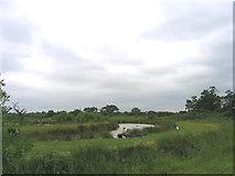 TQ5986 : Fishing Lakes, Clay Tye, Upminster, Essex by John Winfield