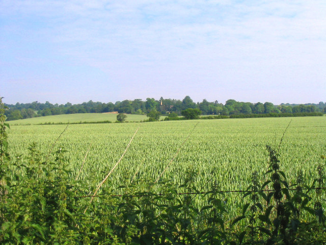 Wheat Field, Hole Farm, Great Warley, Essex