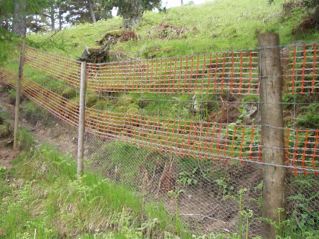 Capercaillie fence