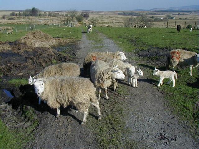 Farm Animals in a farm field
