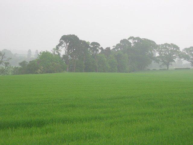 Barley Field, Saltoun Hall Mains.