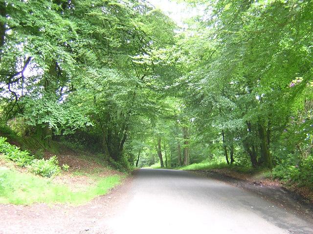 Road Marsh Plantation Gt. Haldon Hill Devon