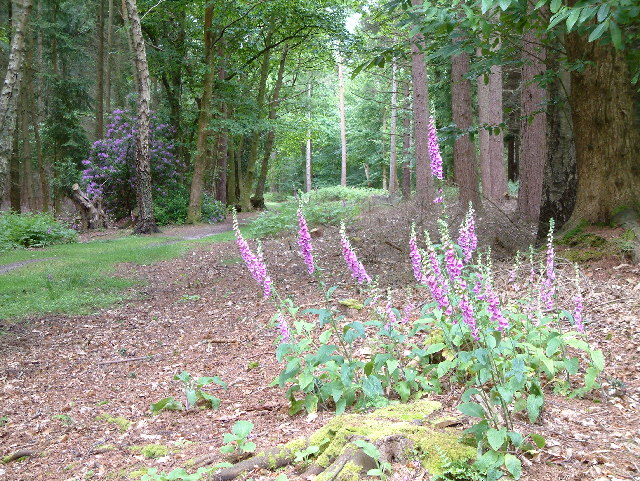 Anderwood Inclosure, New Forest