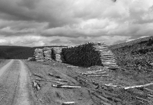 Logpiles north of Craigie Law
