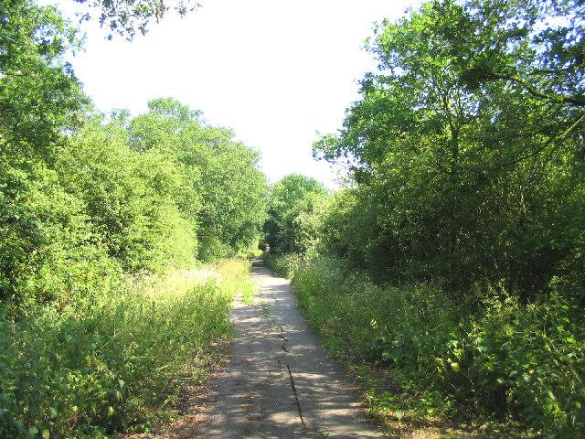 """""""Nature takes over!"""", Moor Lane, Cranham, Essex"""