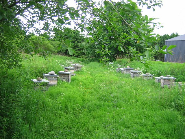 Beehives, Aberbothrie
