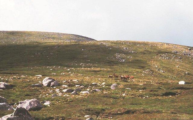 Deer on Huisabhal Mor