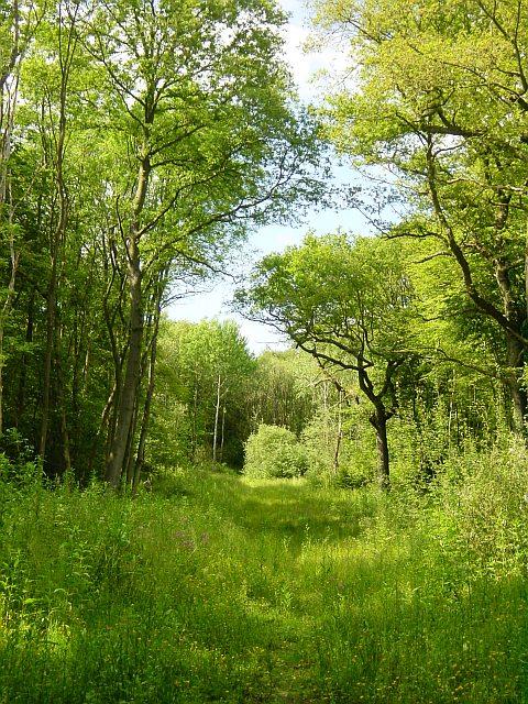Snarkhurst Woods, ancient woodland