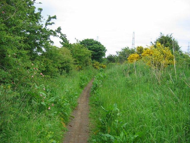 Path near Elphinstone.