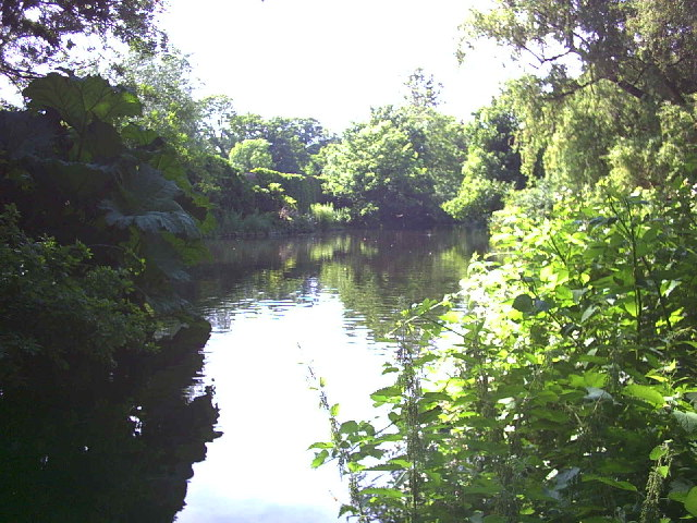 River Wandle in Morden Hall Park.