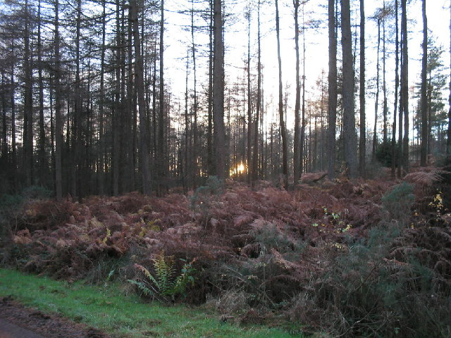 Devilla Forest at sunset