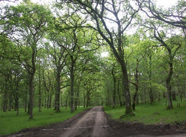 Woodland near Cullachy