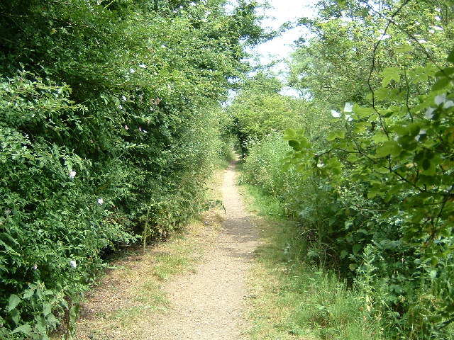 The Thames Path near Culham