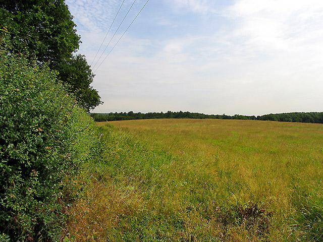 Fallow Field near Bucklebury