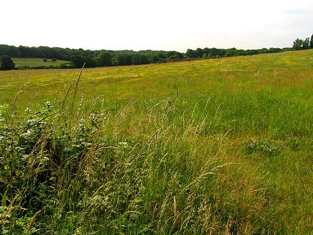 Fallow Farmland near Upper Bucklebury