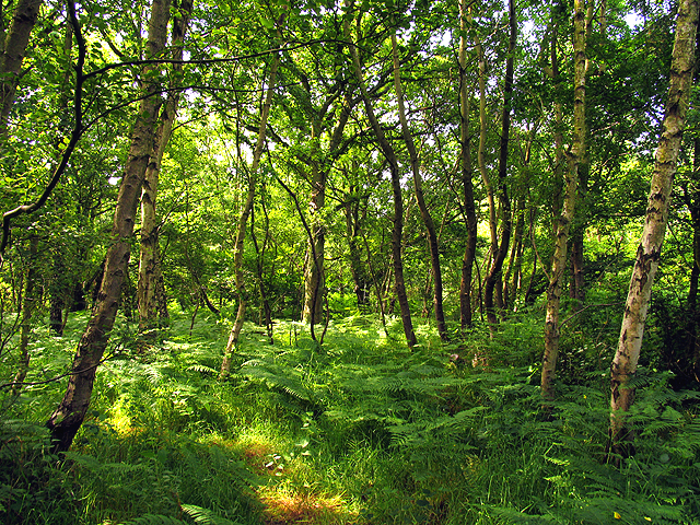 Woodland near Upper Bucklebury