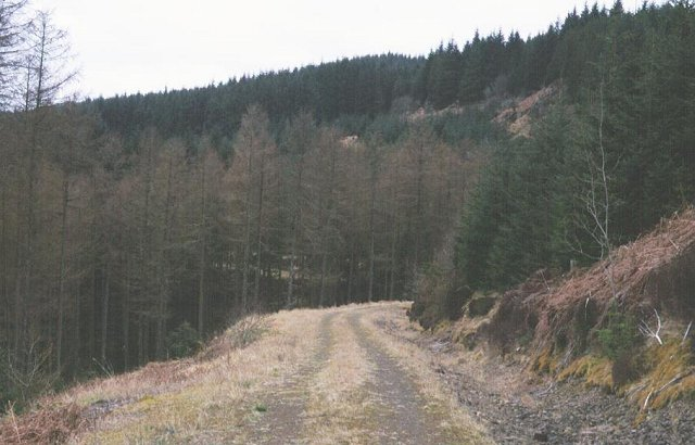 Forest road near Loch Awe.