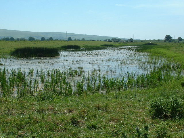 Adur Water Meadows