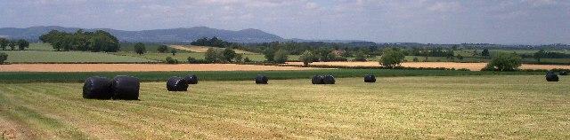 Strensham Court Farmland