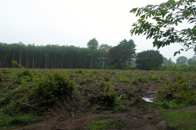 Logging in Stansted Forest