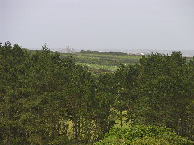 Conifers overlooking St Michaels Mount
