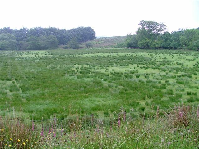 Improved Pasture, Torosay