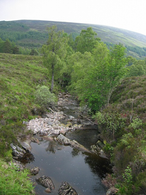 Trees along moorland burn