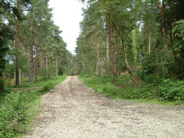 Ramsdown Plantation, Hurn