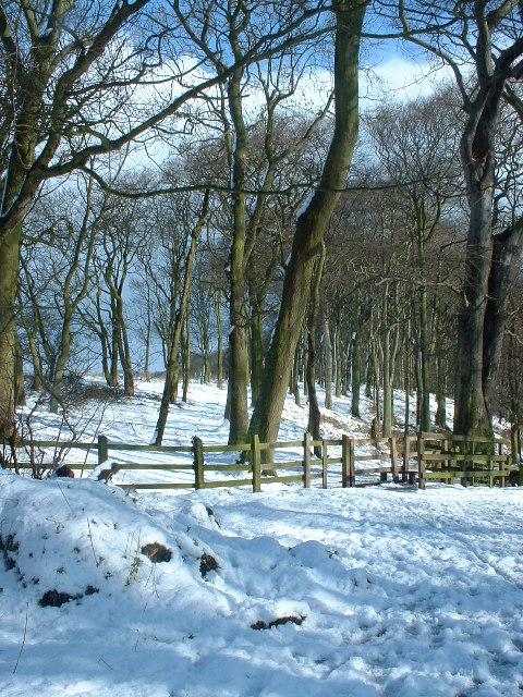 Ancient Woodland Holywell Dene