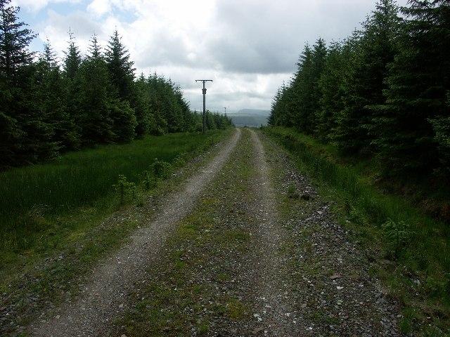 Forest track near Inveraray
