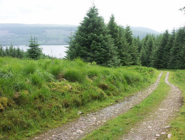 Forest track near Inveraray