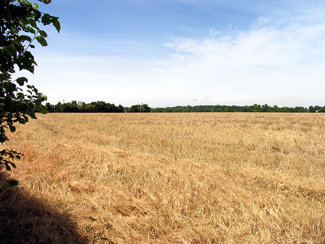 Harvested Farmland near Tidmarsh