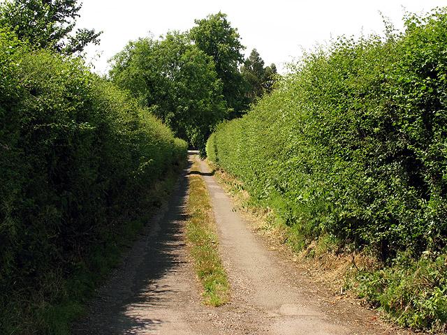 Overgrown Lane near Pangbourne